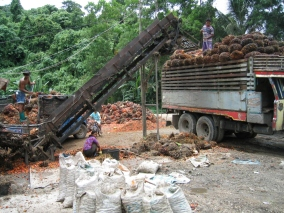 Red palm oil in process